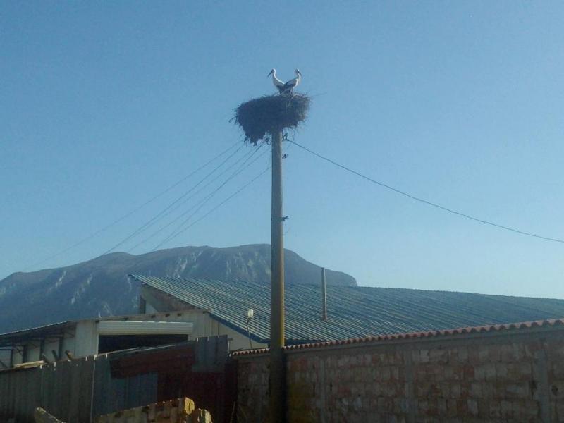 Първите за тази година щъркели вече долетяха във Врачанско, научи