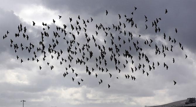 Руски пътнически самолеткацна принудително днес след сблъсък с птици.Няма пострадали