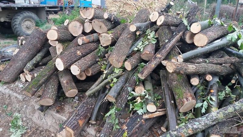 Незаконни дърва са намерени в две къщи във Врачанско, съобщиха