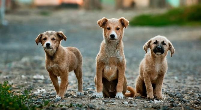 Ужасяващи данни лъснаха от доклад за безстопанствените кучета на територията