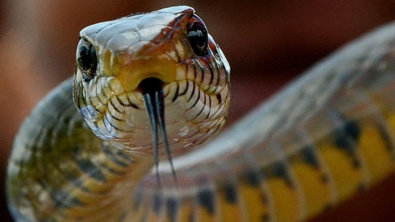 Спасители от Монтана уловиха змия, промъкнала се в кметството на