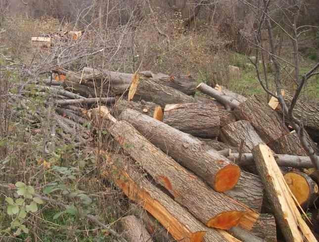 На 15 ноември горски надзиратели засекли трима мъже, извършващи сеч