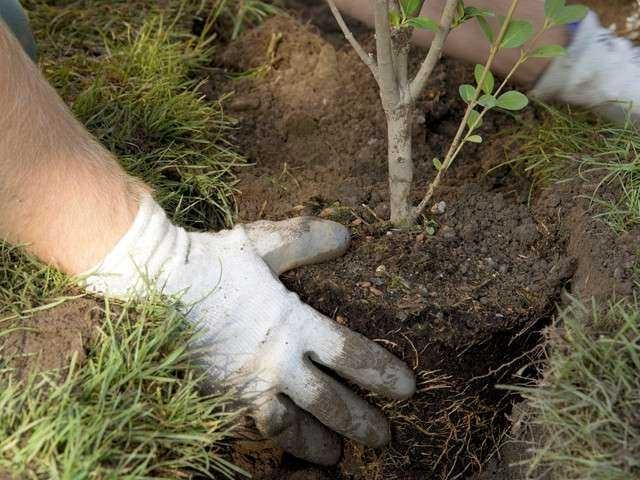 Над 5 000 нови дръвчета се очаква да бъдат засадени