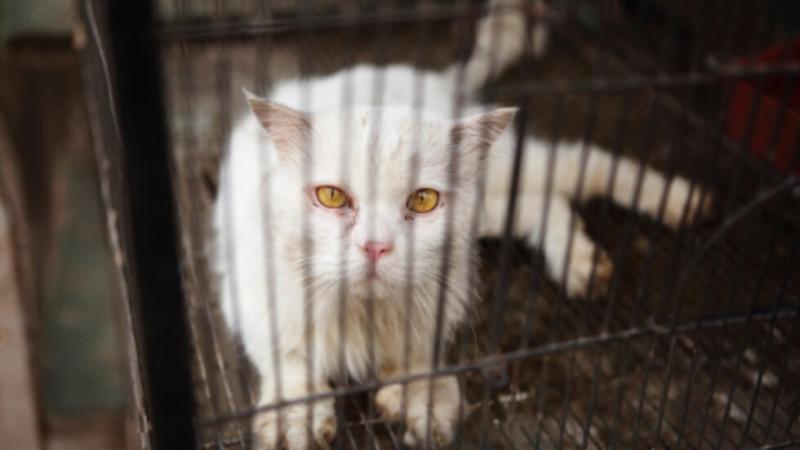 Полицията издирва котка-наркотрафикант