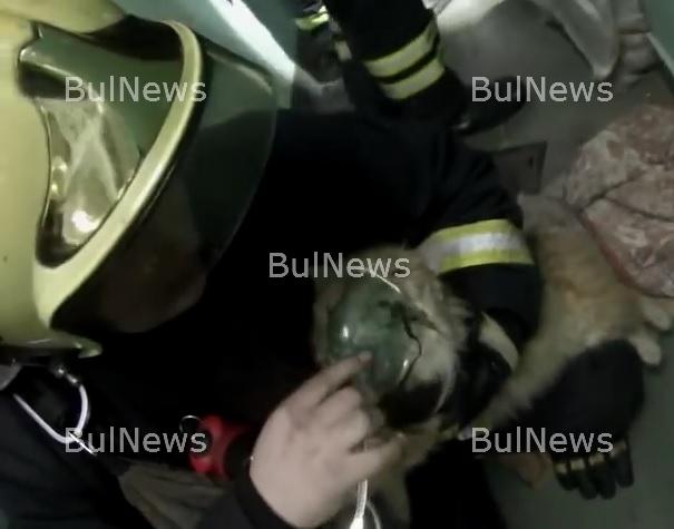 Имало и човеци! Спасиха коте с кислородна маска след пожар