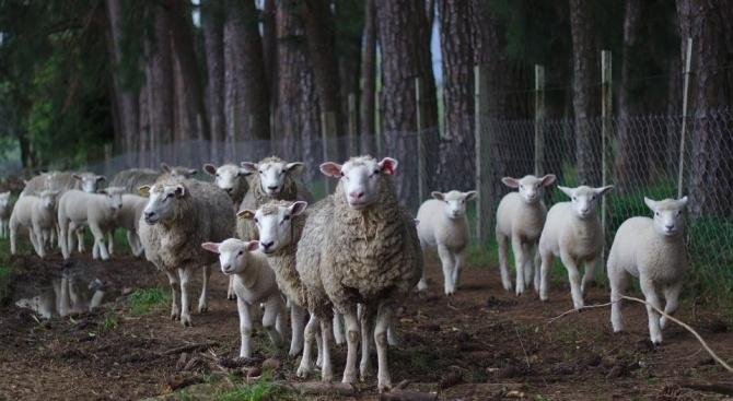 И днес в ямболското село Шарково ще се евтаназират животни