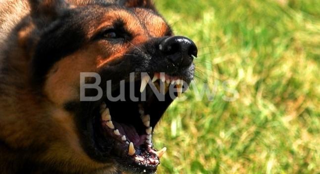 Куче нападна и нахапа дете в Монтана, научи информационна агенция