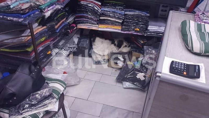 Паника в центъра на Враца! Улично куче нахлу в магазин на Пробива и ужаси продавачка /снимки/