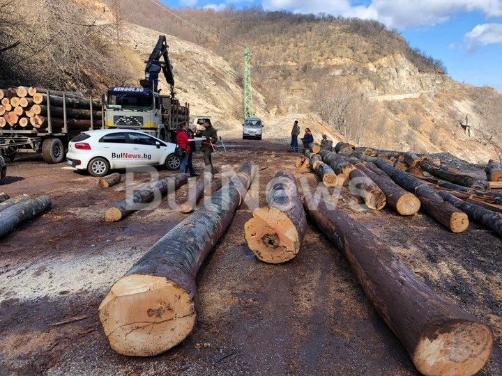 Дърводобивни фирми изсичат вековни дървета във Врачанския Балкан, сигнализираха до